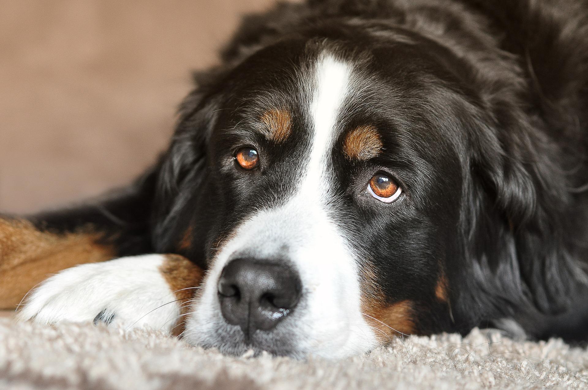 dog-2668993_1920