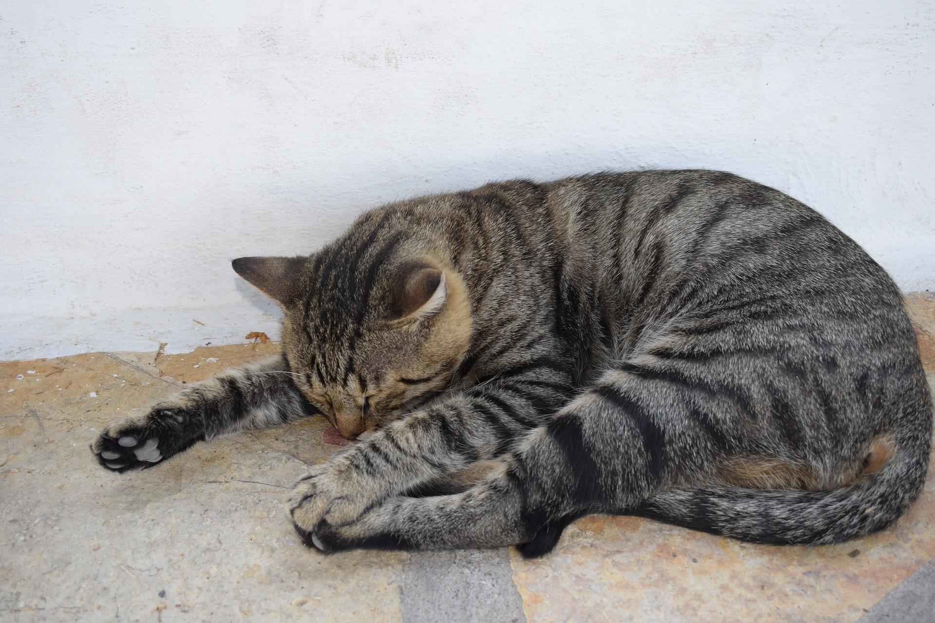 cat-2554264_1920
