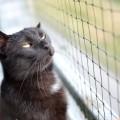 cat-3061377_1920