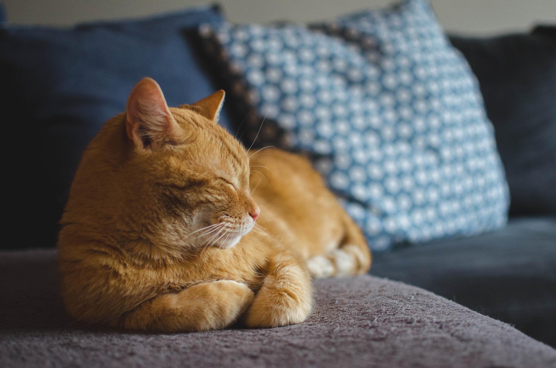 cat-ronco