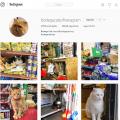 bodegas cat