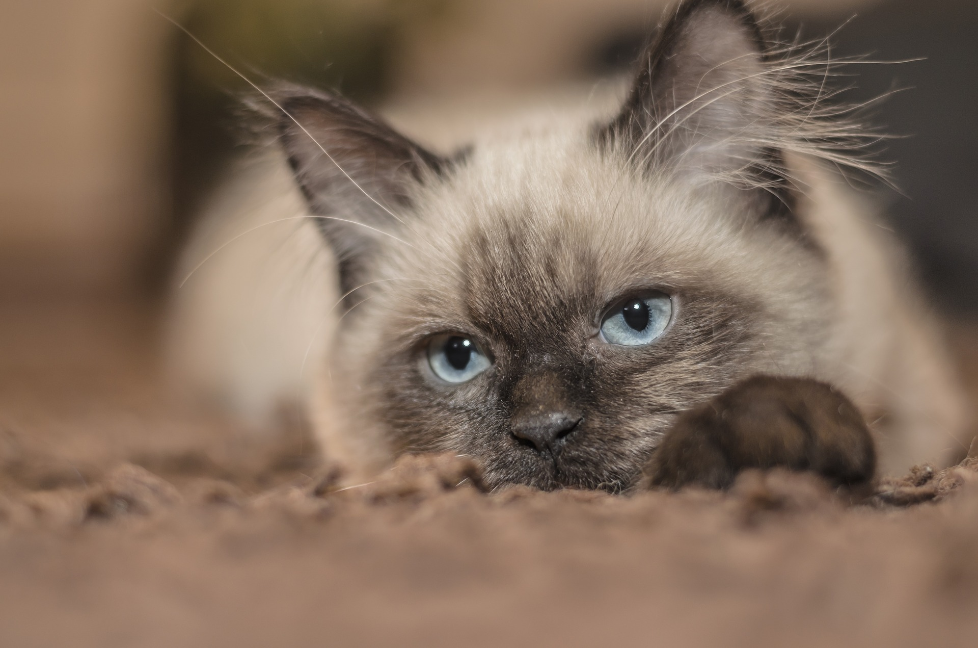 cat-1613088_1920