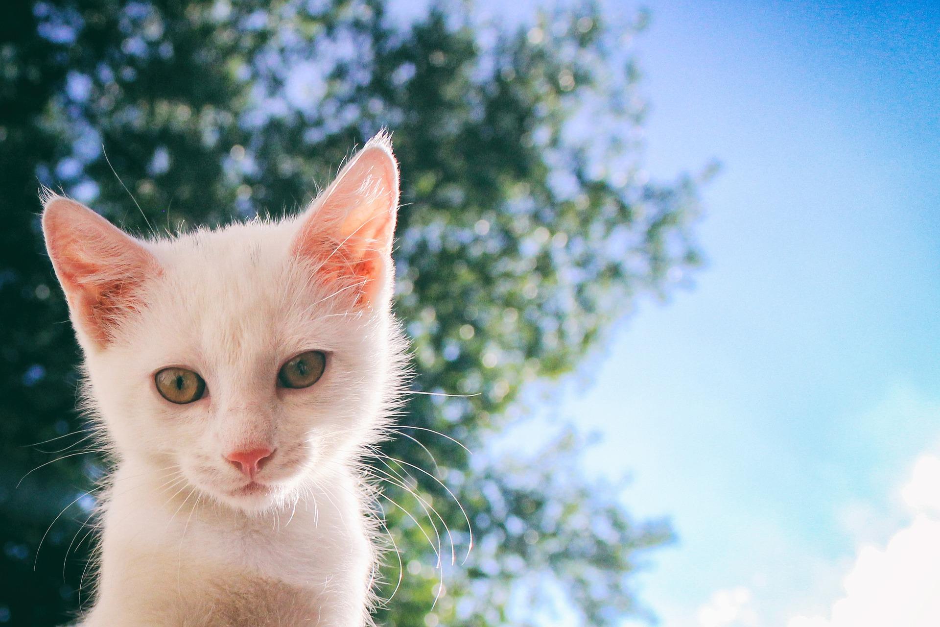 cat-2858293_1920