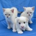 puppy-2724672_1920