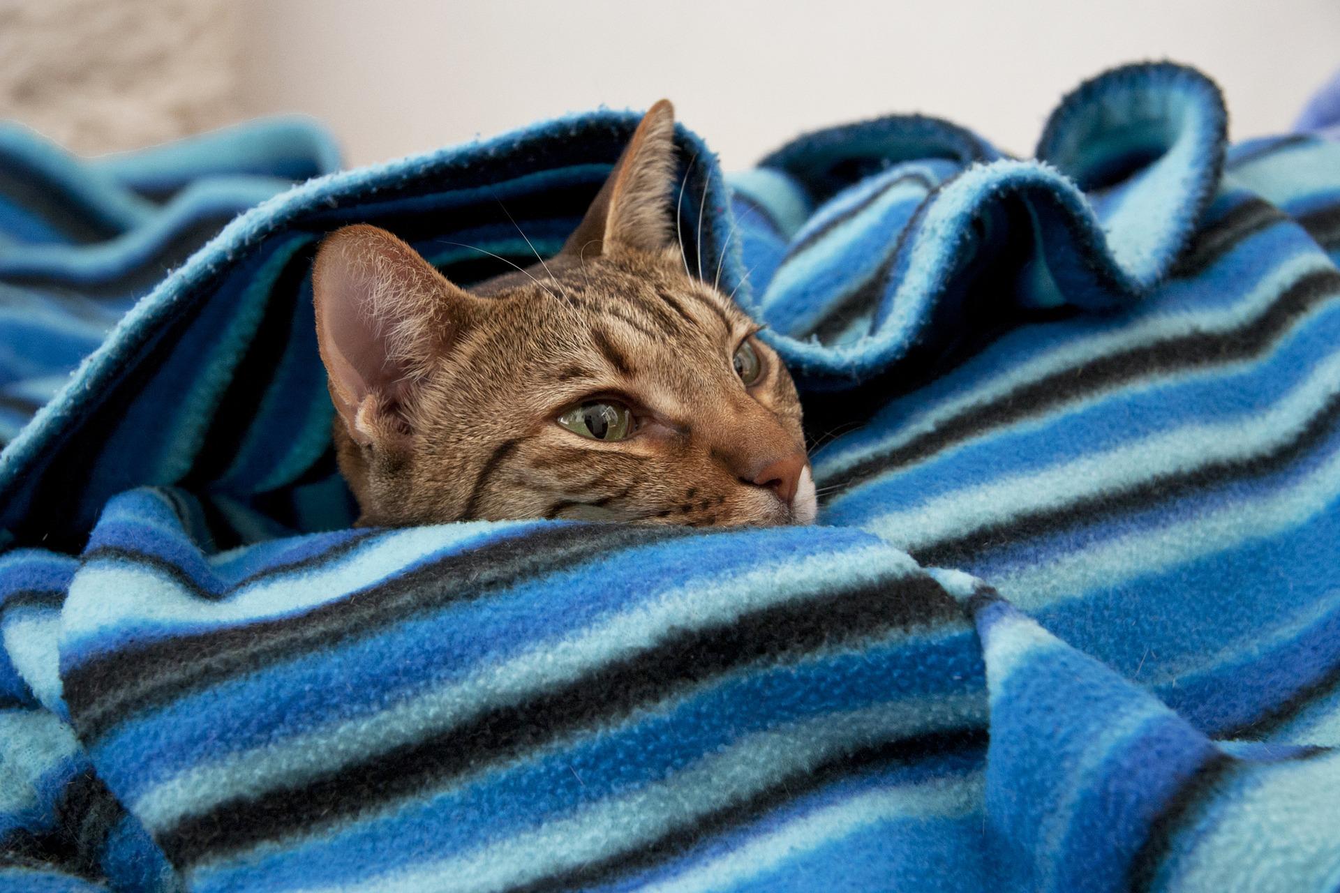cat-3261093_1920