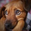 dog-3071334_1920
