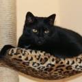 black-cat-3294637_1920