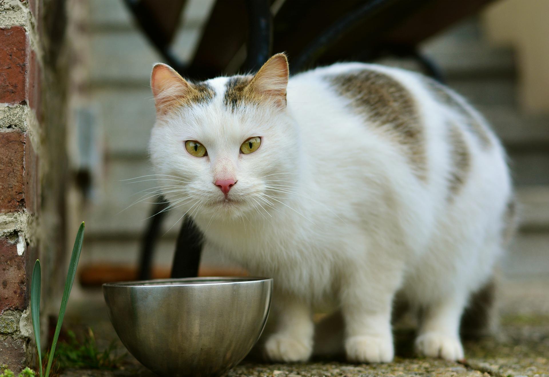cat-3159694_1920