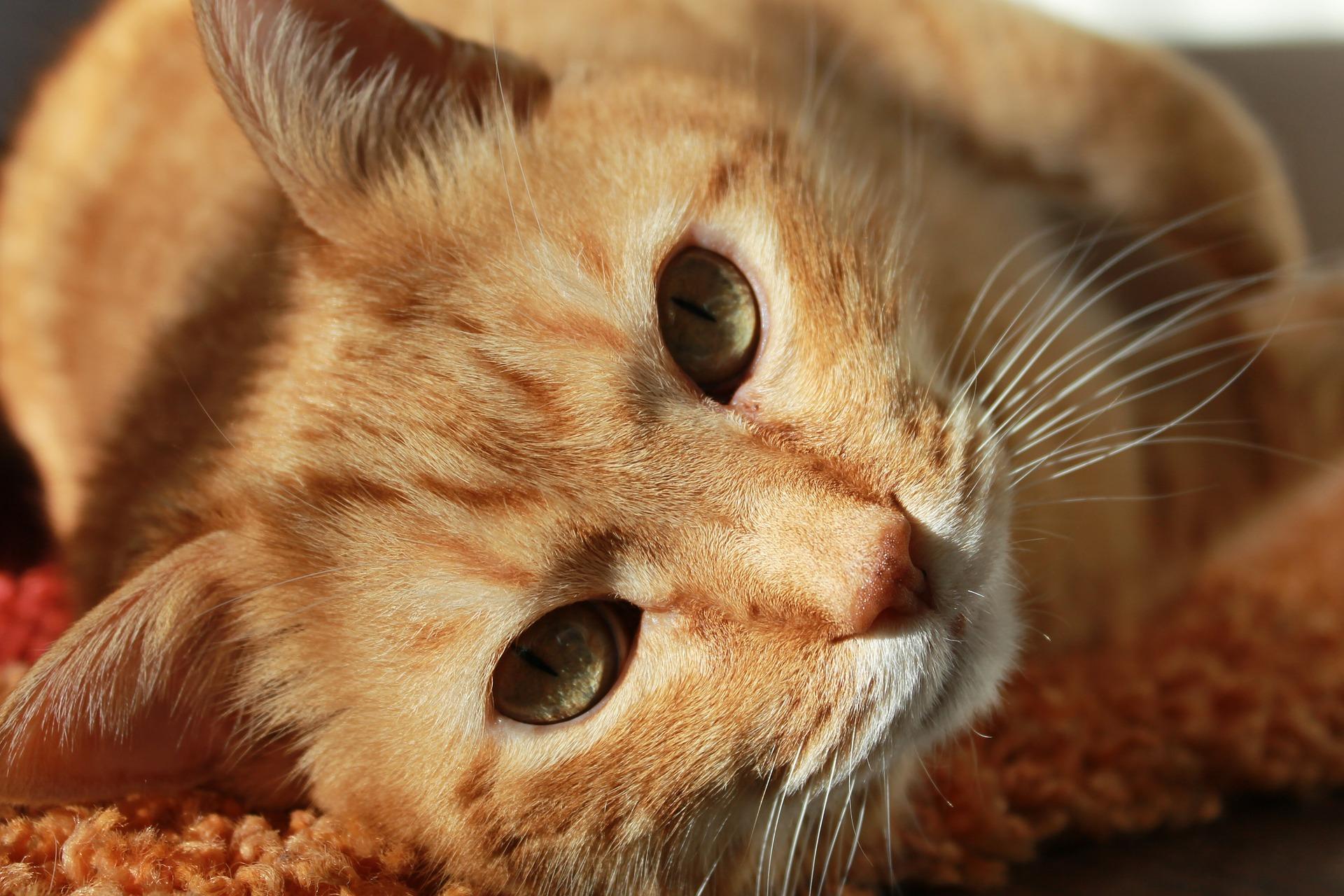 cat-636172_1920