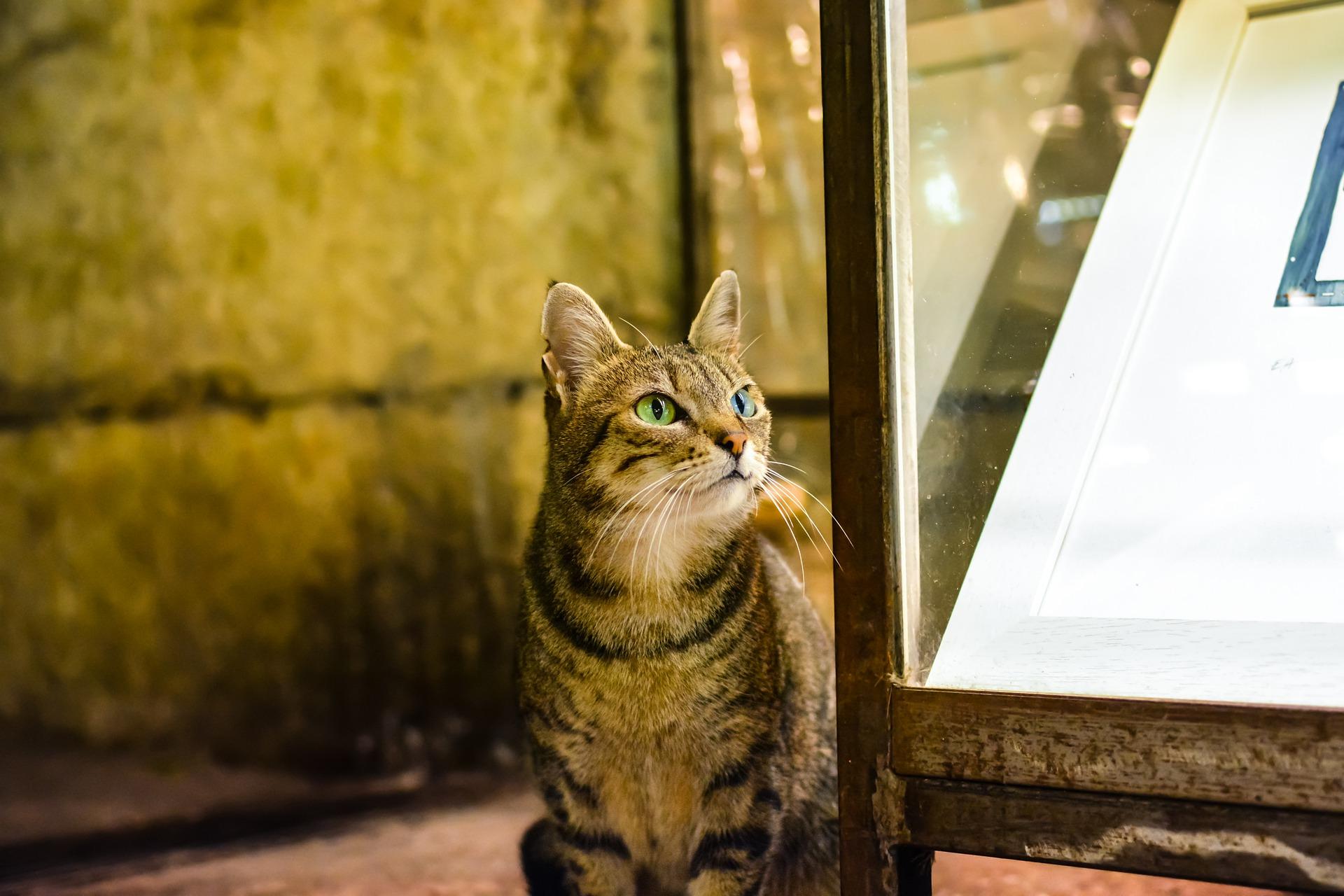 cat-3097768_1920