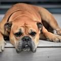 dog-2437110_1920