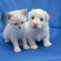 puppy-2726896_1920