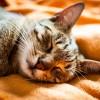 cat-2768805_1920 (1)