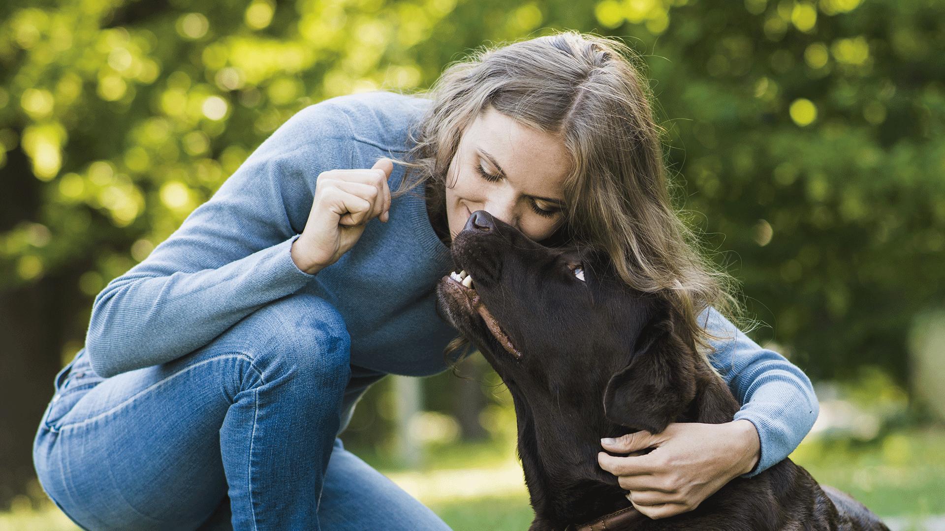 Cães entendem sentimentos humanos, apenas os leem de forma diferente