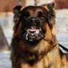 Portal_Como-identificar-a-raiva-canina