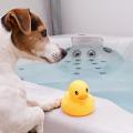 Portal_Frequência-de-banho-e-banho-a-seco