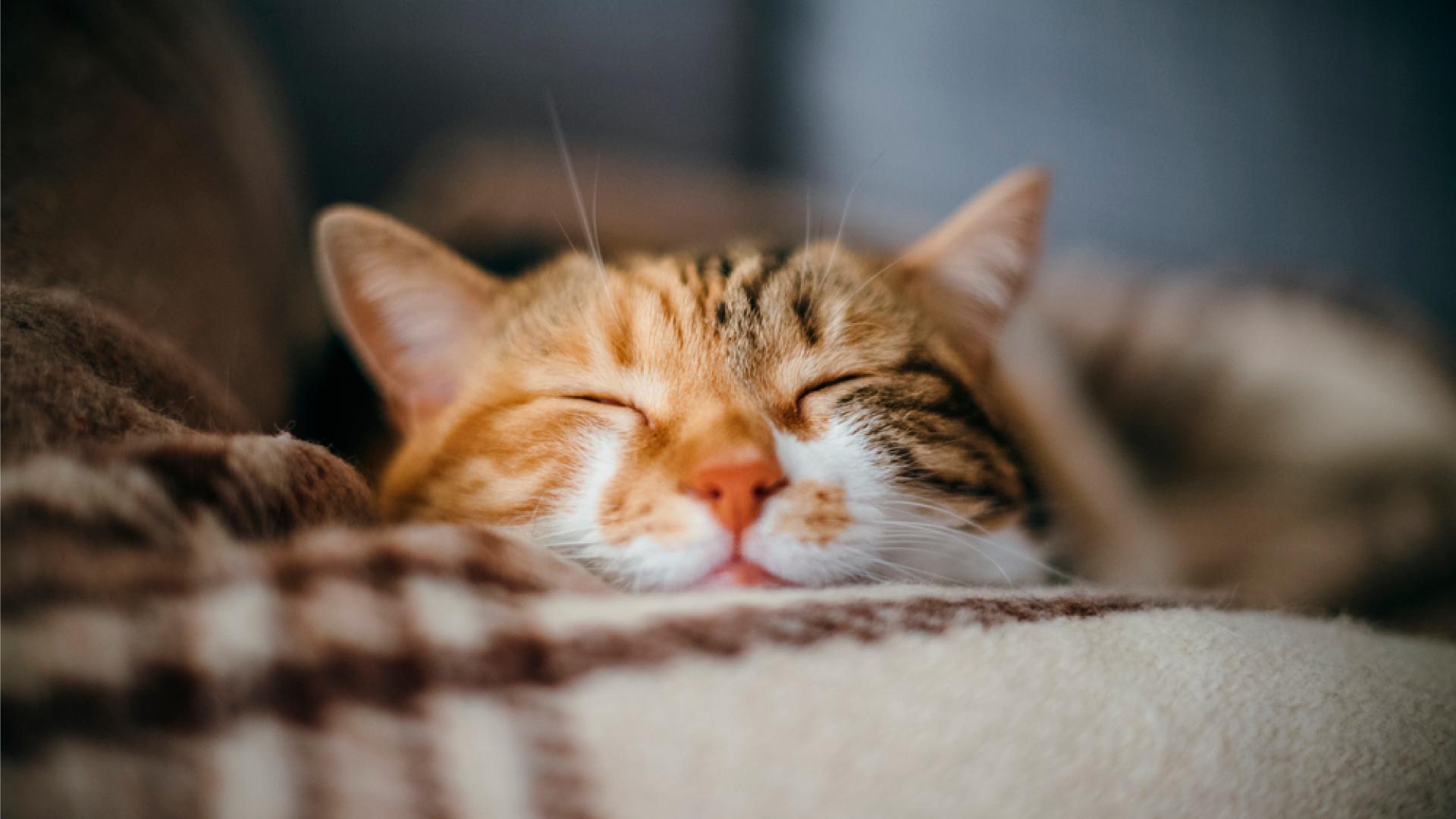 Portal_Seu-felino-feliz