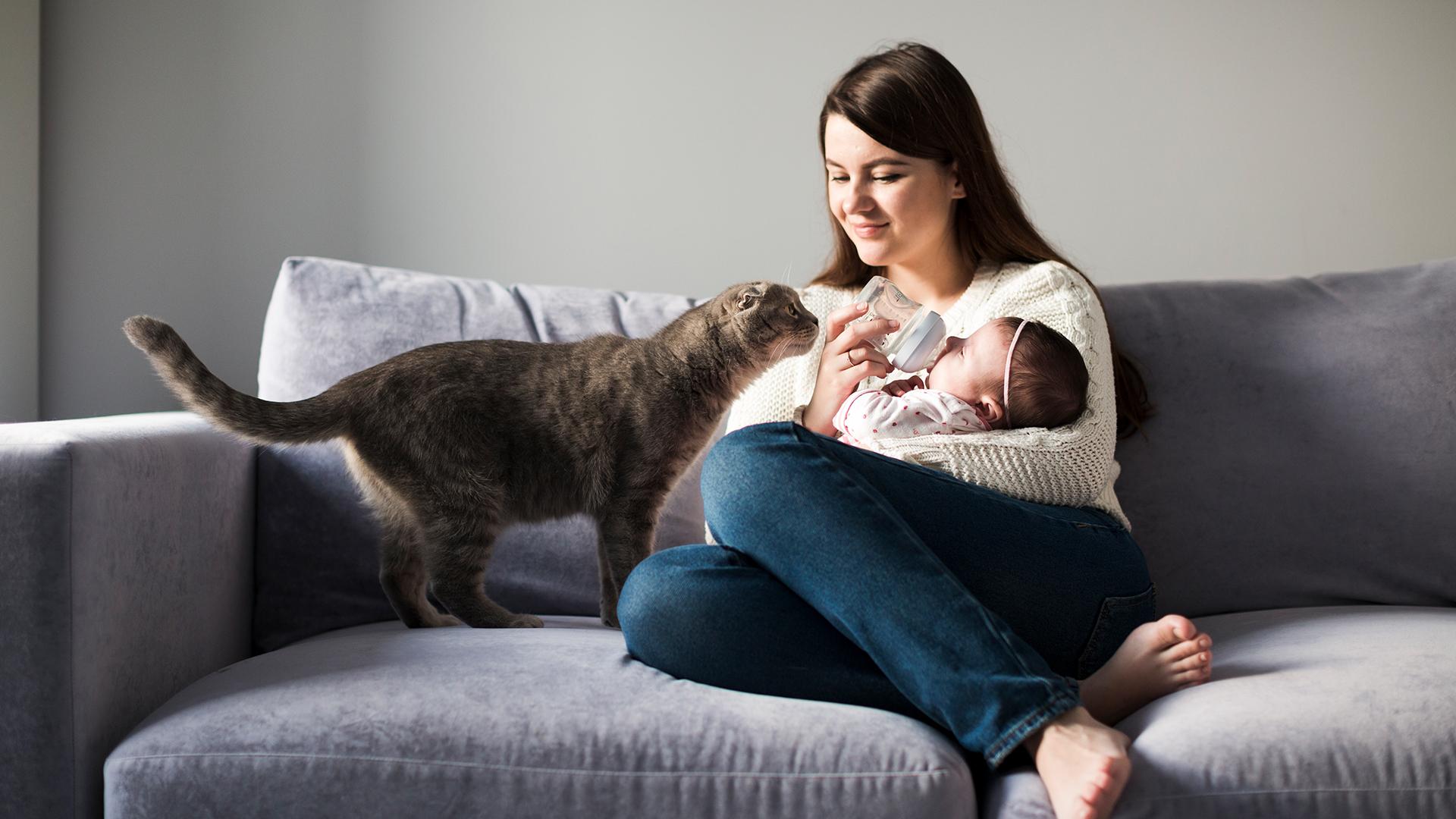 Como preparar um gato para a chegada do bebê