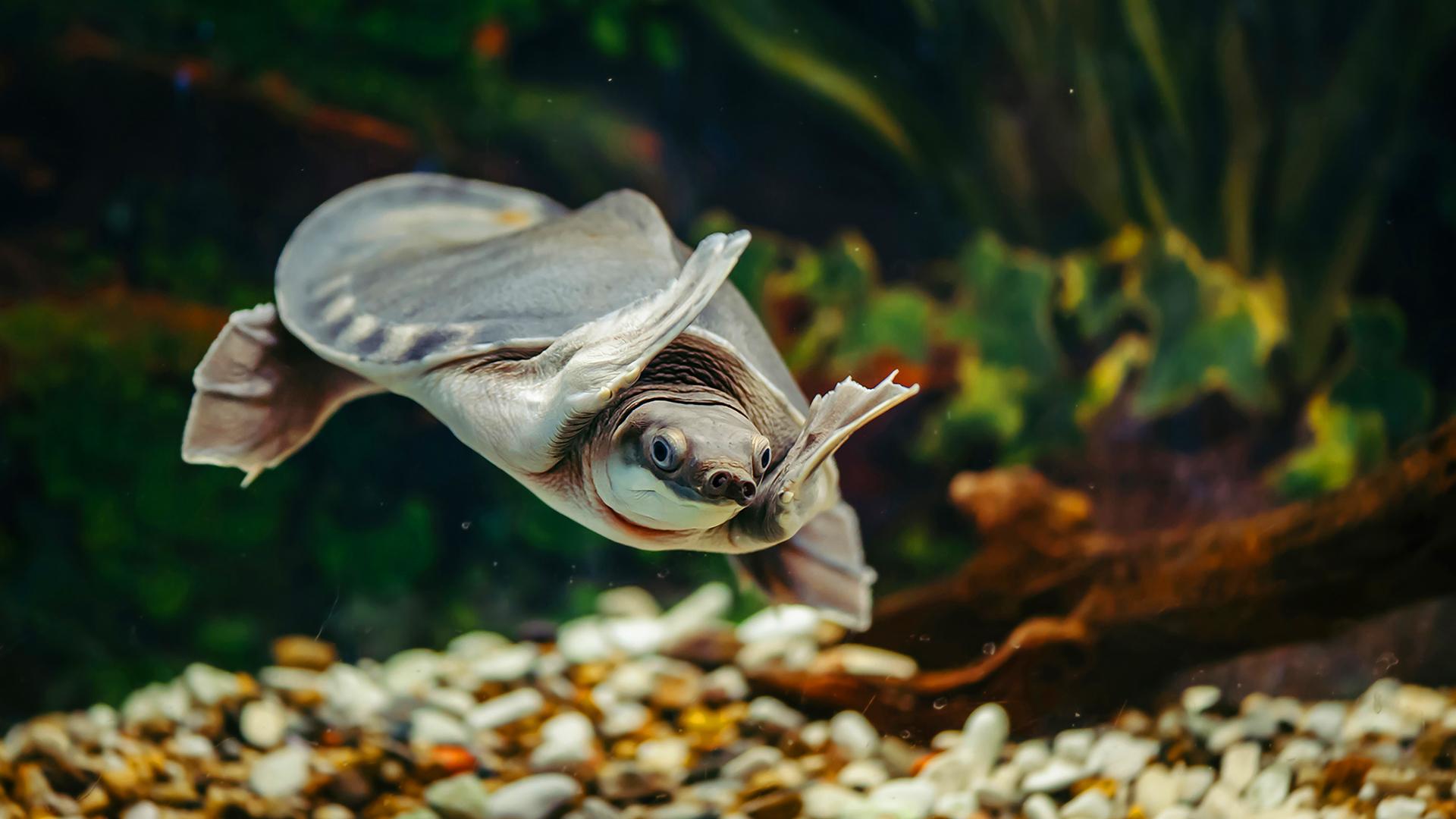 Dicas e curiosidades sobre aquaterrário para tartaruga