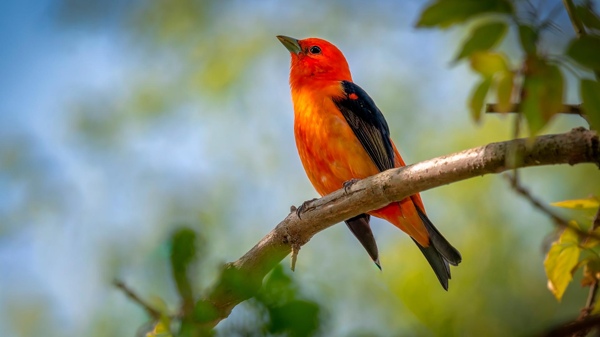 Saiba como identificar possíveis doenças em pássaros