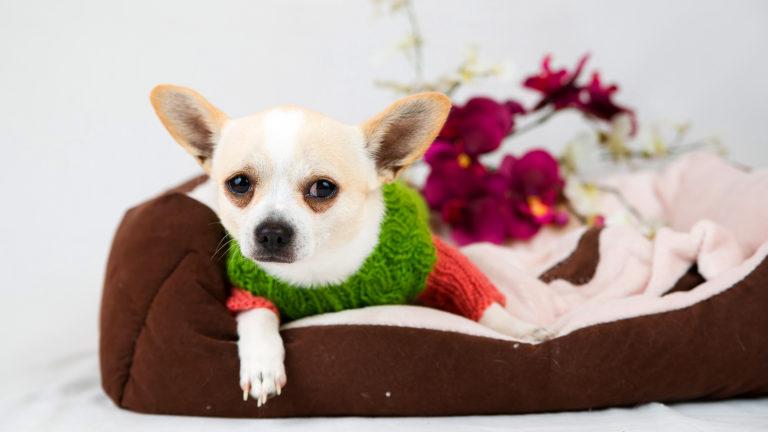 Como escolher a melhor casinha de cachorro?