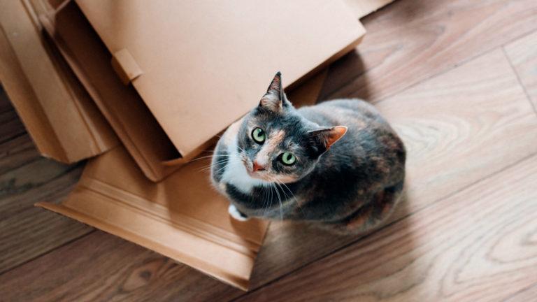 Gatos sofrem de ansiedade?