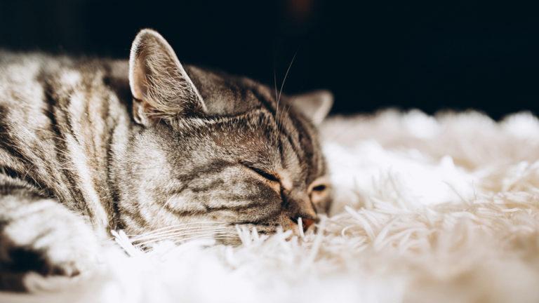 Doenças genéticas mais comuns em gatos
