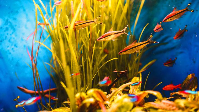 Como ter um aquário marinho em casa