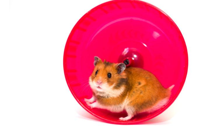 Globo é boa opção para manter hamster ativo