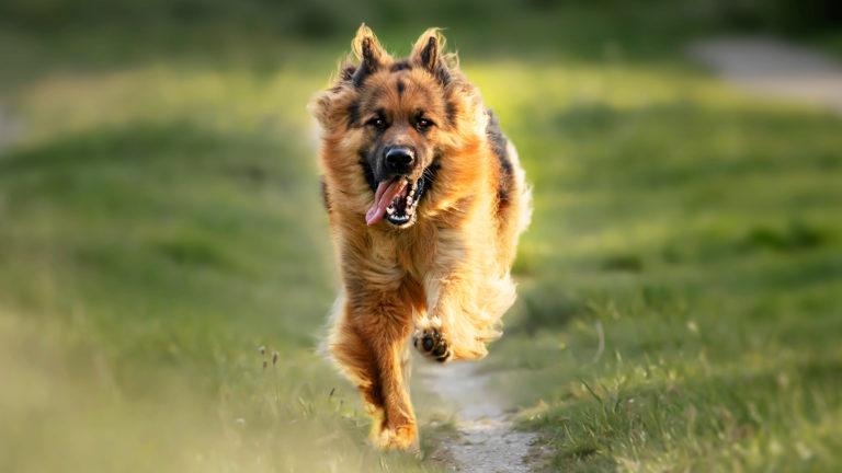 Benefícios dos exercícios físicos para cachorros