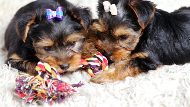 Enriquecimento ambiental para cães: quais produtos usar?