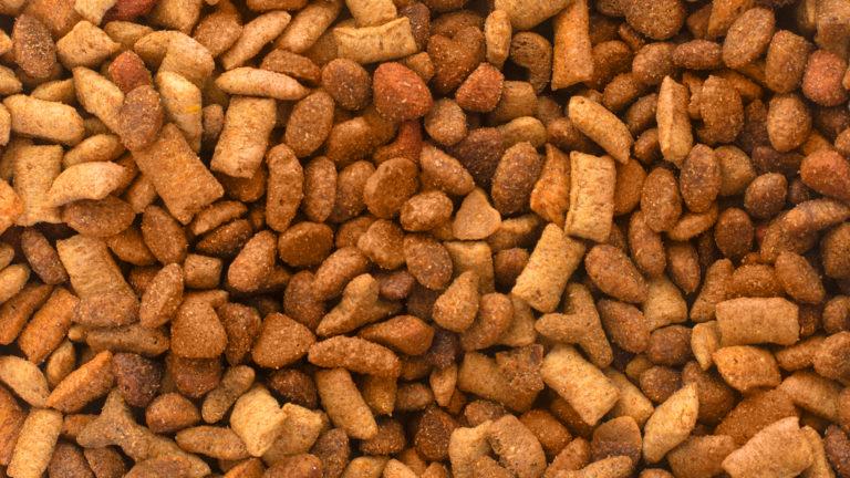 Insetos adoram o pet food do seu melhor amigo. Não deixe eles o encontrarem!