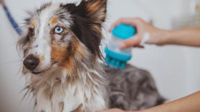 Com o que se preocupar com a higiene do pet