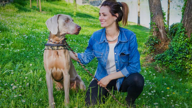 """Tudo sobre o cão weimaraner: um """"apontador"""" estiloso que ama a família!"""