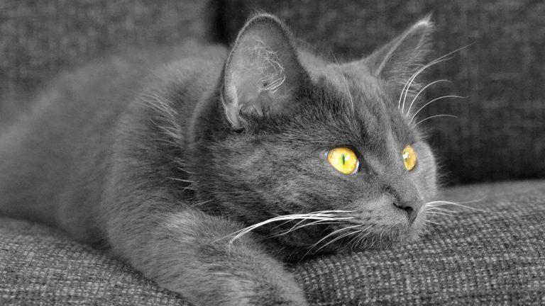 Gatos podem sofrer com ansiedade da separação em viagens, mas existem muitos meios de preparar seu bichinho para este momento