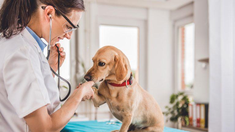 Cadelas não castradas tem alta incidência de câncer de mama