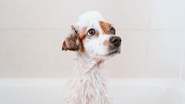 Você sabe o que é Pet Care no mercado brasileiro?