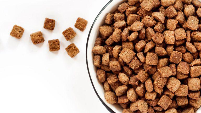 Alimentação do seu pet: comprar ou preparar?